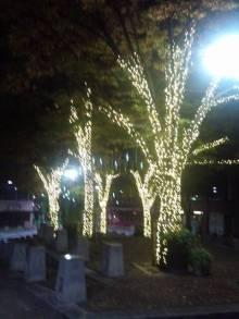Chie Muramoto の『花のある暮らし』-1321200954266.jpg