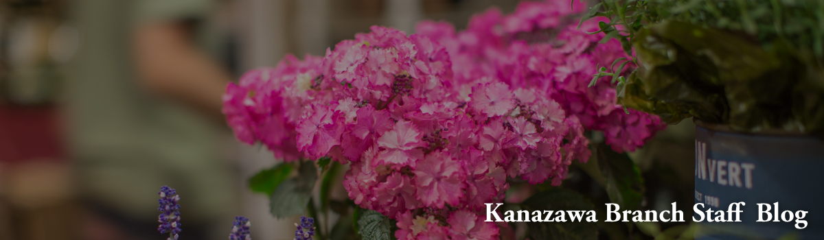 Draw:Garden 金沢店Staff Blog